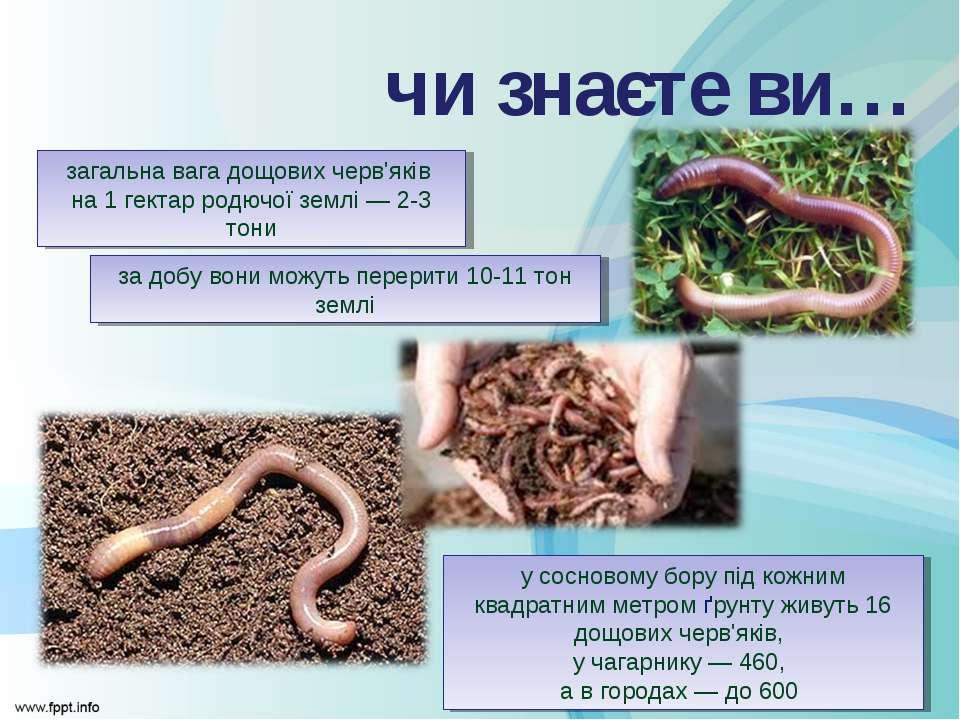у сосновому бору під кожним квадратним метром ґрунту живуть 16 дощових черв'я...