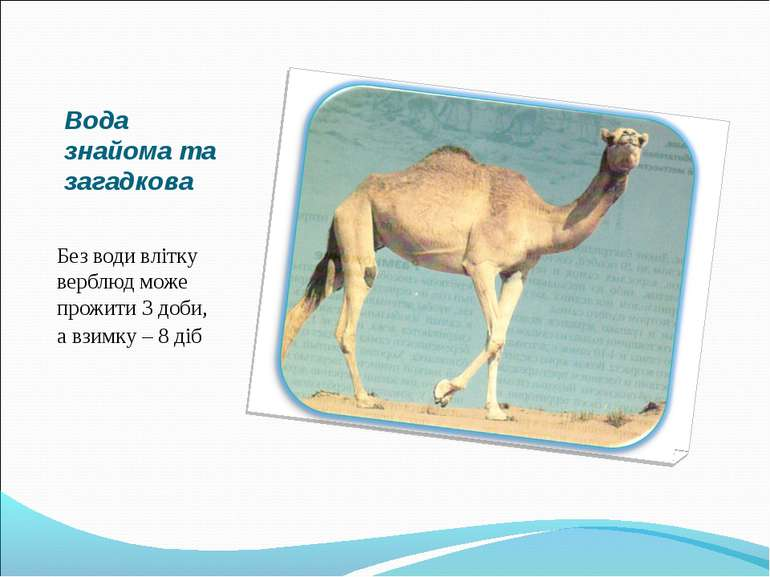 Вода знайома та загадкова Без води влітку верблюд може прожити 3 доби, а взим...