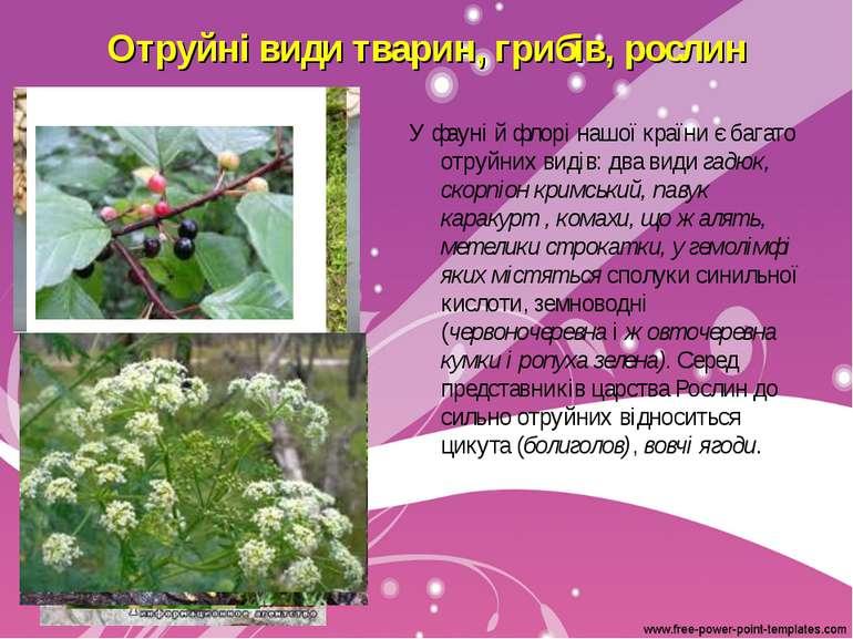 Отруйні види тварин, грибів, рослин У фауні й флорі нашої країни є багато отр...