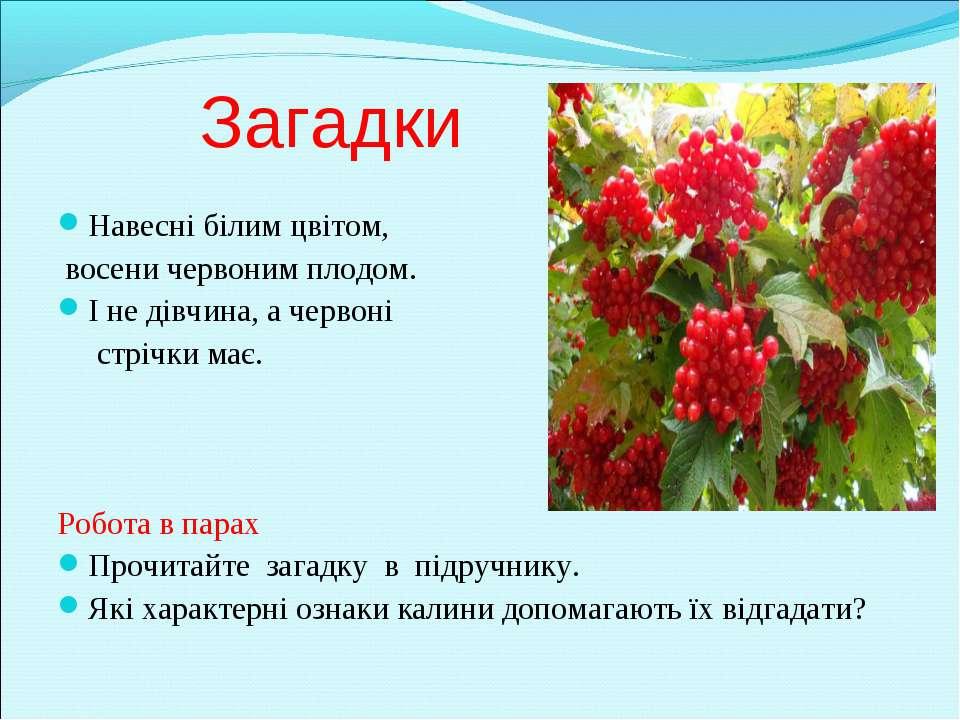 Загадки Навесні білим цвітом, восени червоним плодом. І не дівчина, а червоні...