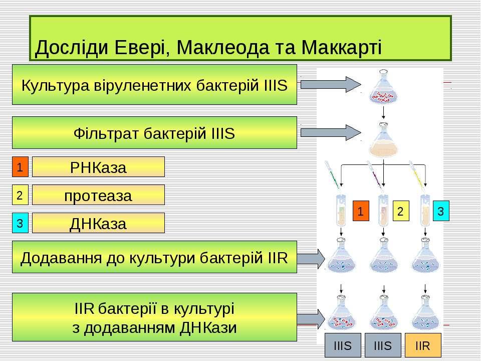 Досліди Евері, Маклеода та Маккарті Культура віруленетних бактерій ІІІS Фільт...