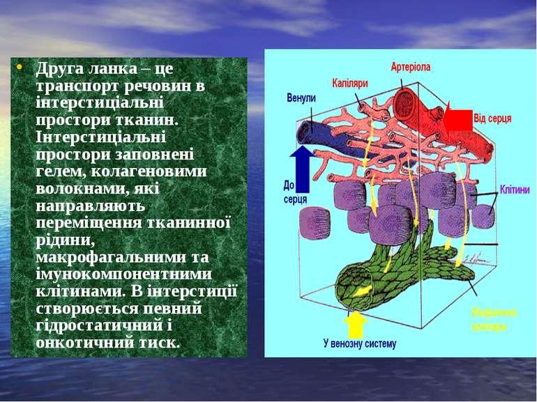 Друга ланка – це транспорт речовин в інтерстиціальні простори тканин. Інтерст...