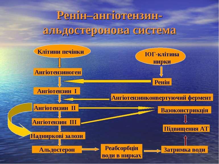 Ренін–ангіотензин-альдостеронова система Ангіотензиноген Клітини печінки ЮГ-к...