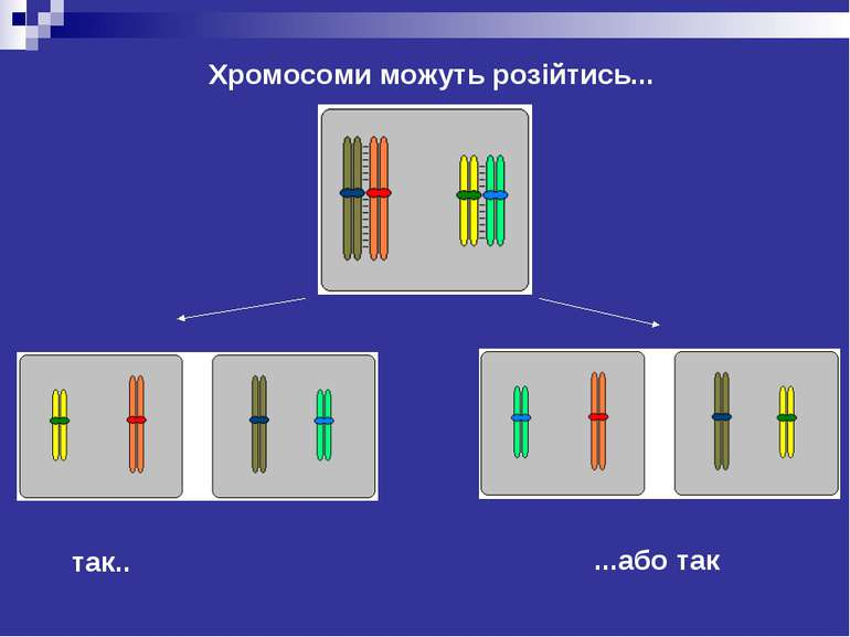 Хромосоми можуть розійтись...