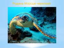 Родина Морські черепахи