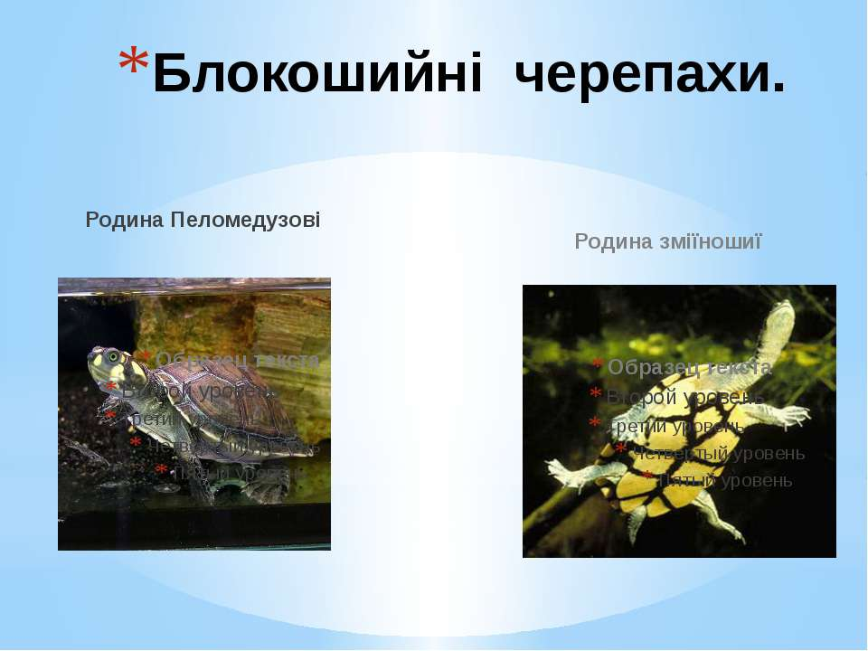 Родина Пеломедузові Родина зміїношиї Блокошийні черепахи.
