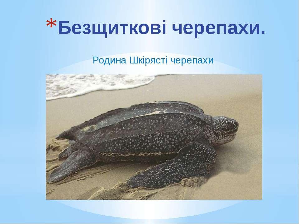 Родина Шкірясті черепахи Безщиткові черепахи.