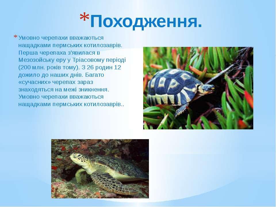 Походження. Умовно черепахи вважаються нащадками пермських котилозаврів. Перш...
