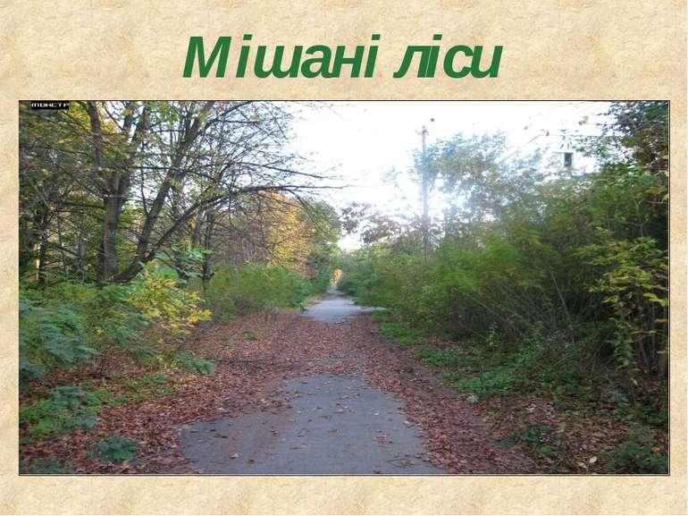 Мішані ліси