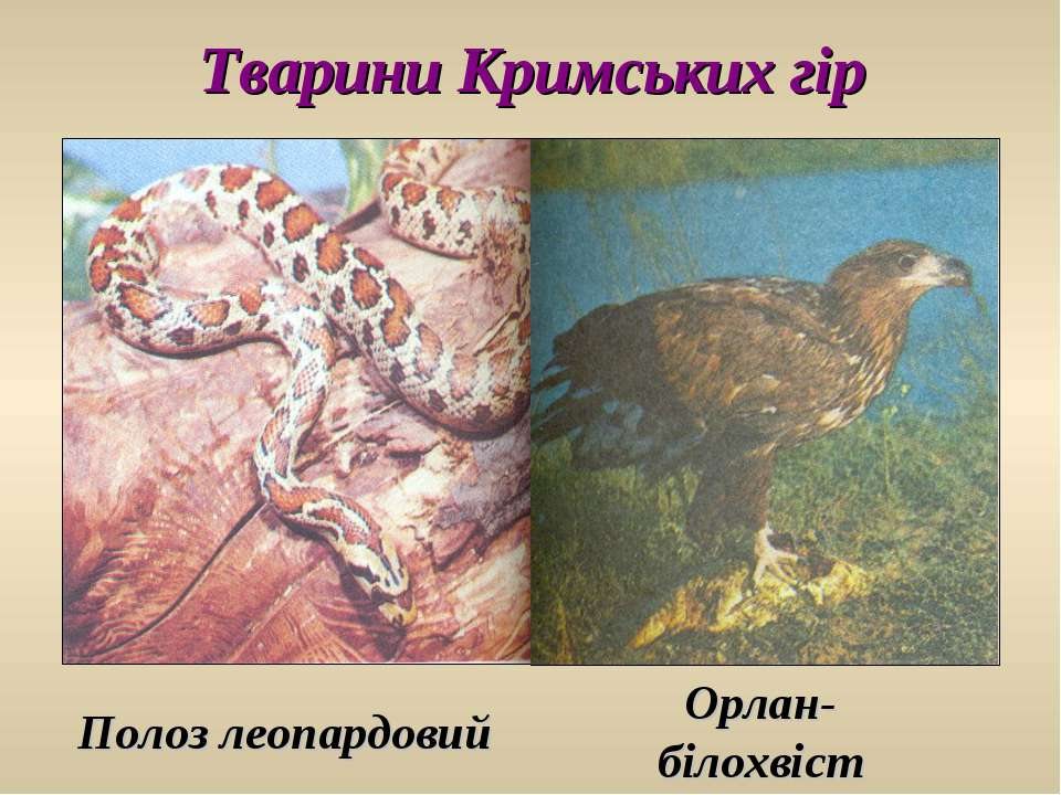 Тварини Кримських гір Полоз леопардовий Орлан- білохвіст