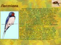 Ластівка Ластівка символізує щасливе родинне життя, ласку, любов і ніжність. ...