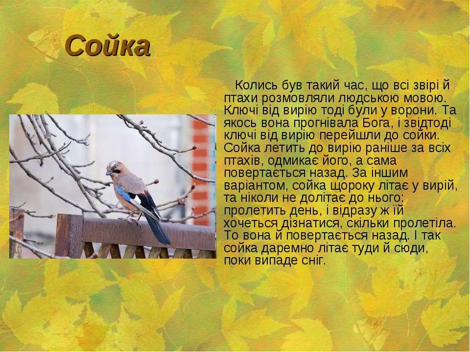 Сойка Колись був такий час, що всі звірі й птахи розмовляли людською мовою. К...