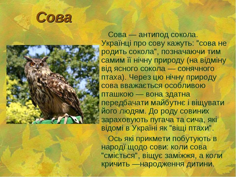 """Сова Сова — антипод сокола. Українці про сову кажуть: """"сова не родить сокола""""..."""