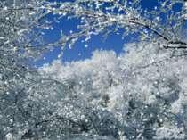 Білесенькі сніжиночки, Вродились ми з воді. Легенькі, мов пушиночки, Спустили...