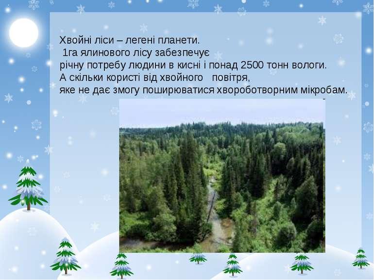 Хвойні ліси – легені планети. 1га ялинового лісу забезпечує річну потребу люд...