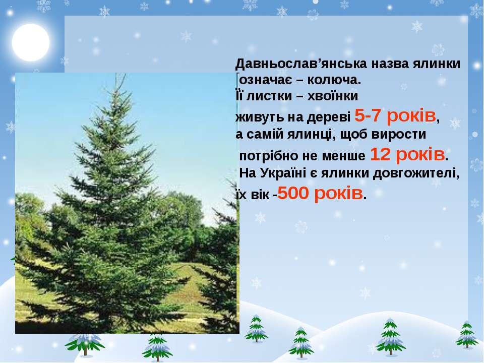 Давньослав'янська назва ялинки означає – колюча. Її листки – хвоїнки живуть н...
