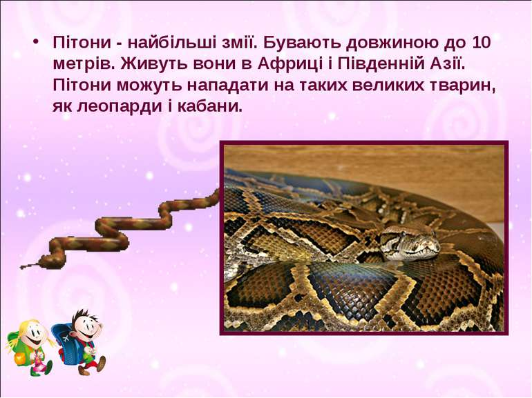 Пітони - найбільші змії. Бувають довжиною до 10 метрів. Живуть вони в Африці ...