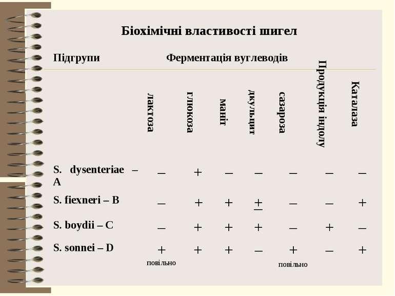 Біохімічні властивості шигел Підгрупи Ферментація вуглеводів Продукція індолу...