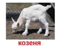 козеня