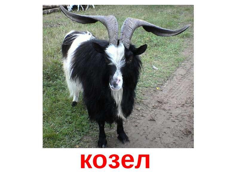 козел