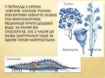 Трубач Кархезіум Фортицела Стилоніхія
