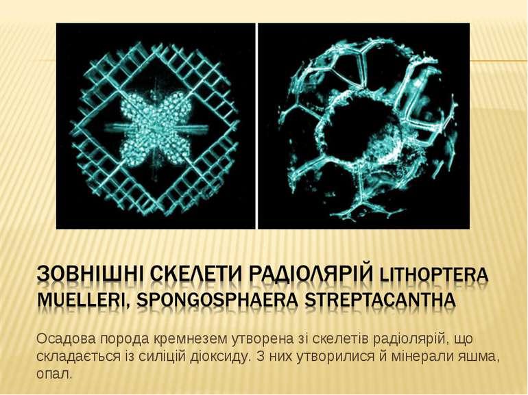 Осадова порода кремнезем утворена зі скелетів радіолярій, що складається із с...