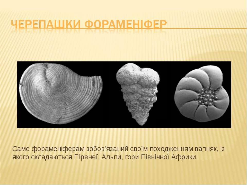 Саме фораменіферам зобов'язаний своїм походженням вапняк, із якого складаютьс...
