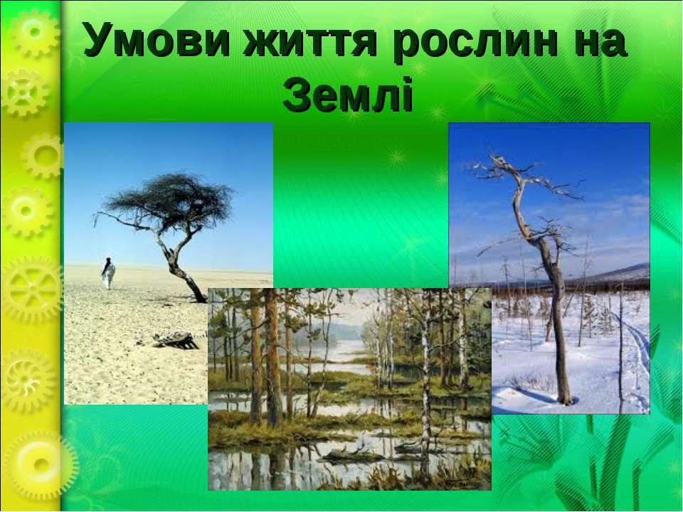 Умови життя рослин на Землі