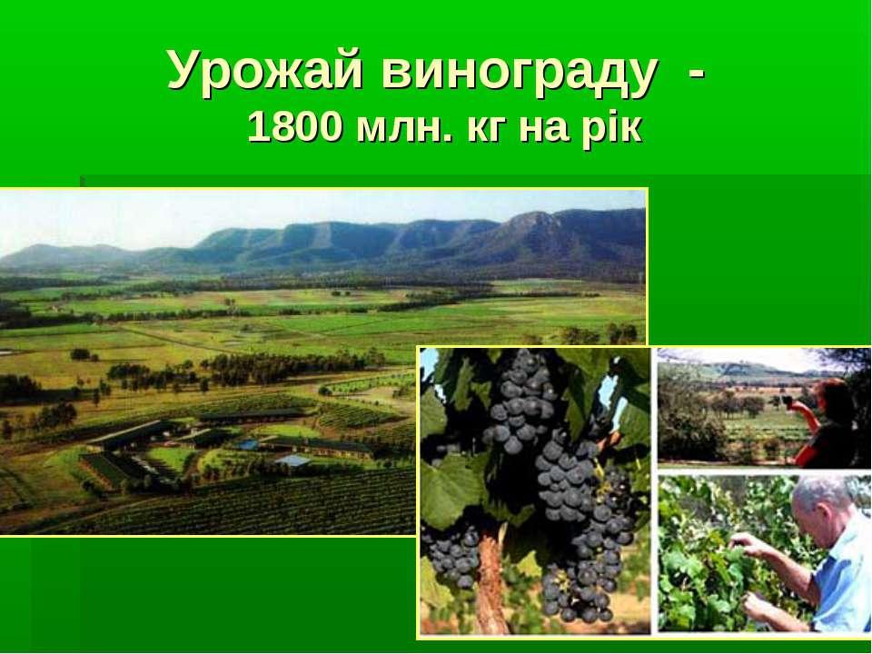 Урожай винограду - 1800 млн. кг на рік