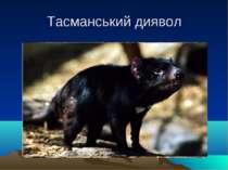 Тасманський диявол