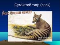 Сумчатий тигр (вовк)