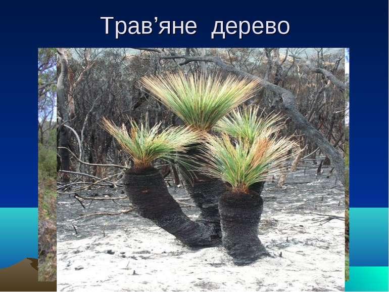 Трав'яне дерево