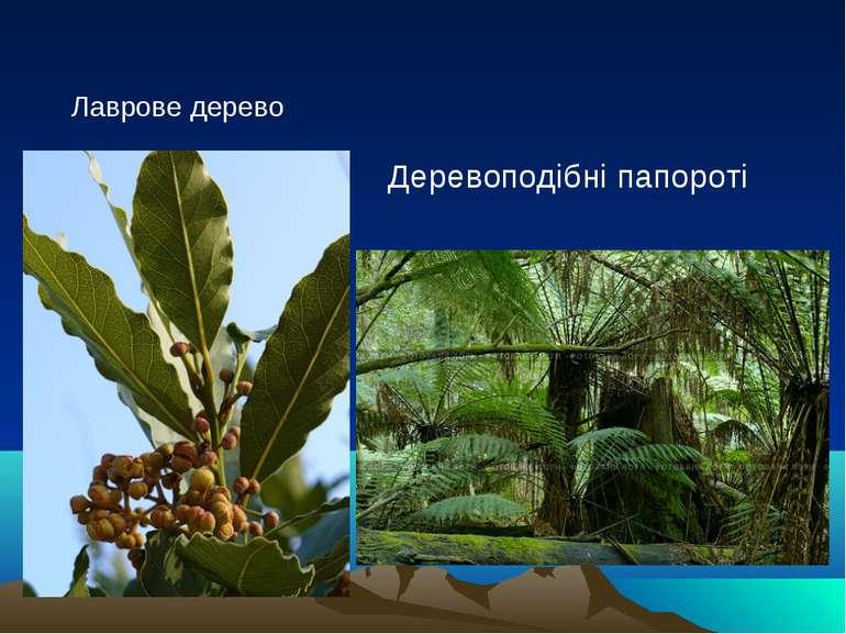 Лаврове дерево Деревоподібні папороті