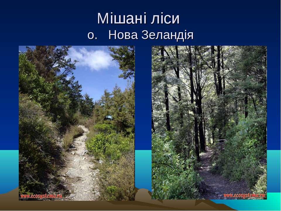 Мішані ліси о. Нова Зеландія