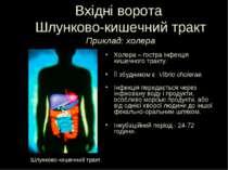 Вхідні ворота Шлунково-кишечний тракт Приклад: холера Холера – гостра інфекці...