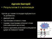 Адгезія бактерій Результатом її є колонізація Адгезія до тканин господаря від...