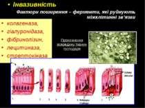 Інвазивність Фактори поширення – ферменти, які руйнують міжклітинні зв'язки к...