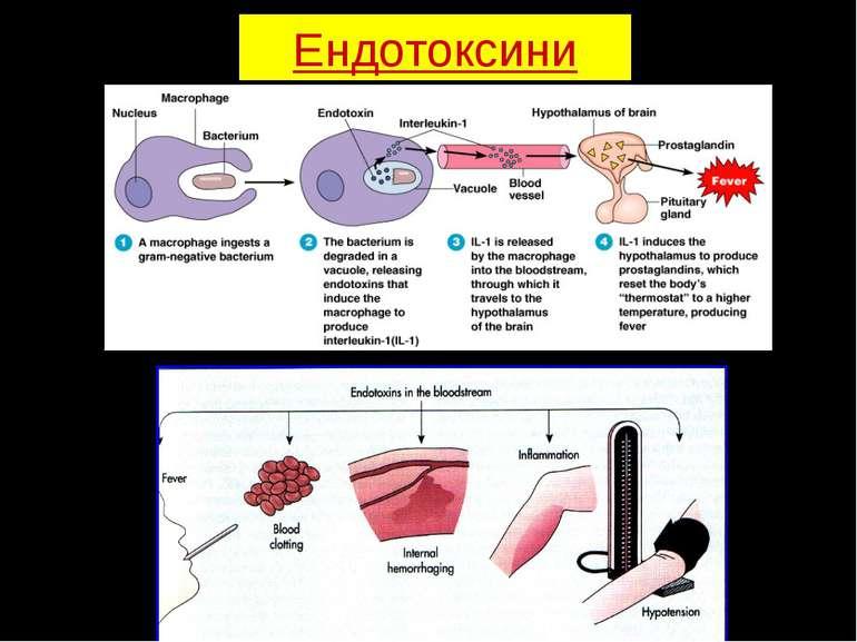 Ендотоксини