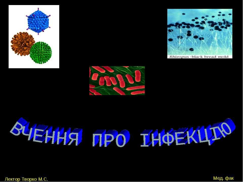 Лектор Творко М.С. Мед. фак