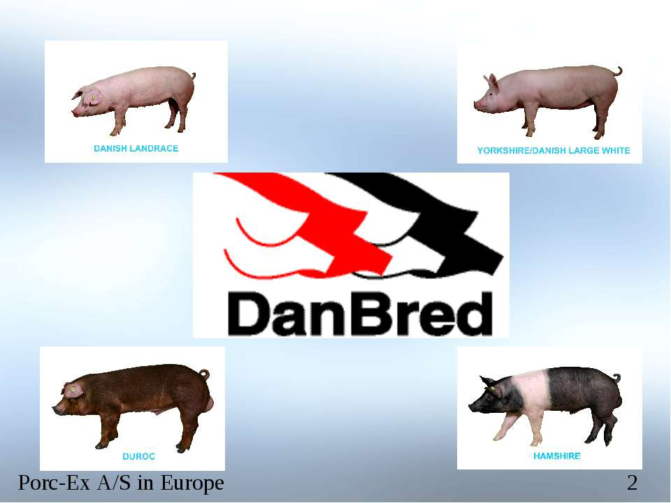 Porc-Ex A/S in Europe