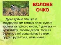 ВОЛОВЕ ОЧКО Дуже дрібна пташка із забарвленням темних гілок, сухого коріння т...