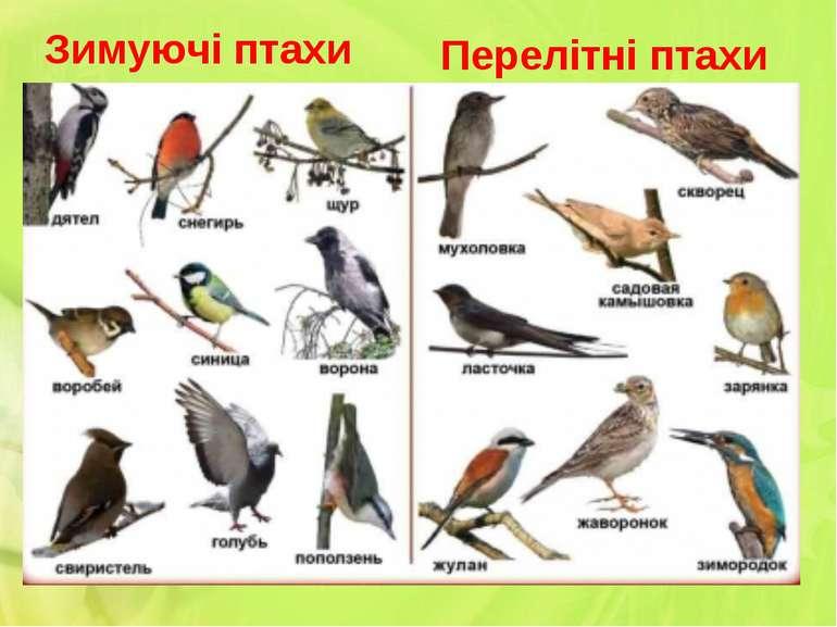 Перелітні птахи Зимуючі птахи