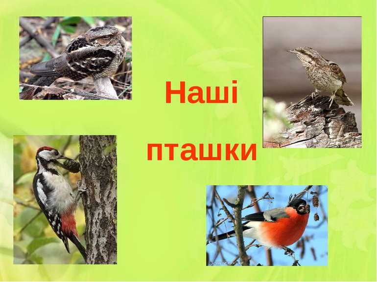 Наші пташки