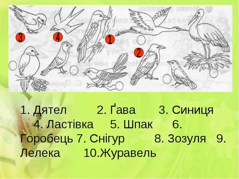 1. Дятел 2. Ґава 3. Синиця 4. Ластівка 5. Шпак 6. Горобець 7. Снігур 8. Зозул...