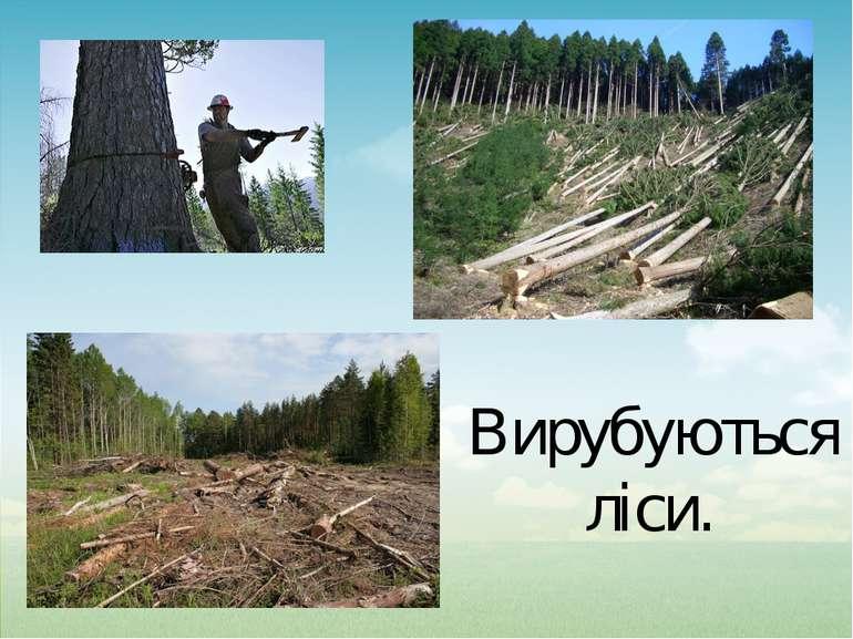 Вирубуються ліси.