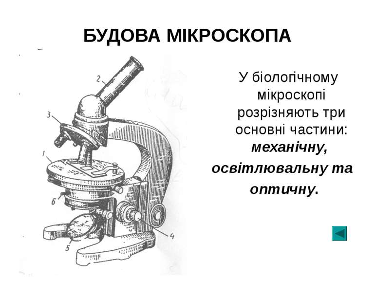 БУДОВА МІКРОСКОПА У біологічному мікроскопі розрізняють три основні частини: ...