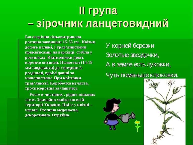 ІІ група – зірочник ланцетовидний Багаторічна тіньовитривала рослина заввишки...