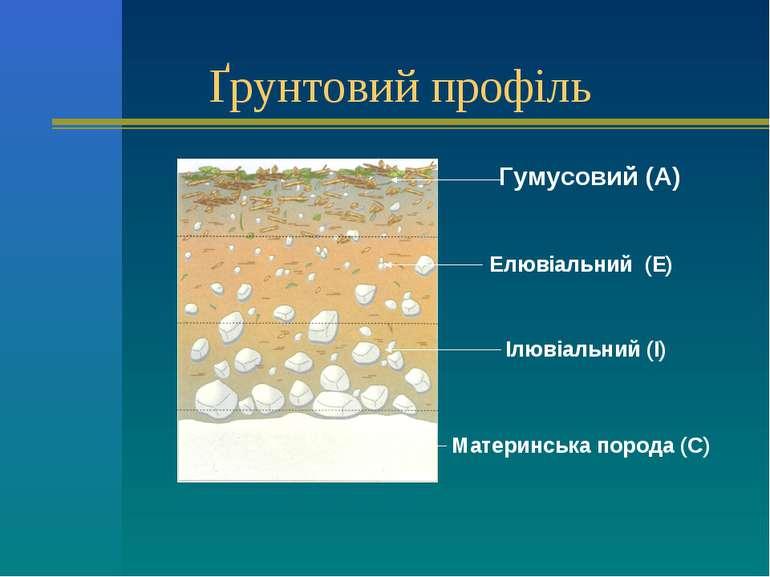 Ґрунтовий профіль Гумусовий (А) Елювіальний (Е) Материнська порода (С) Ілювіа...