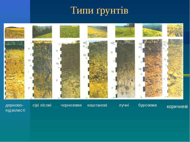 Типи ґрунтів дерново- сірі лісові чорноземи каштанові лучні буроземи підзолис...