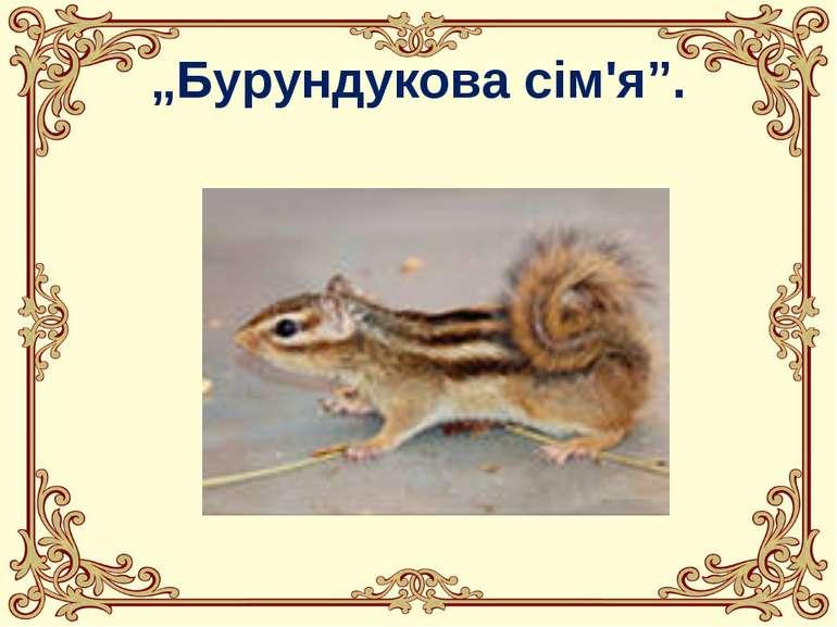 """""""Бурундукова сім'я""""."""